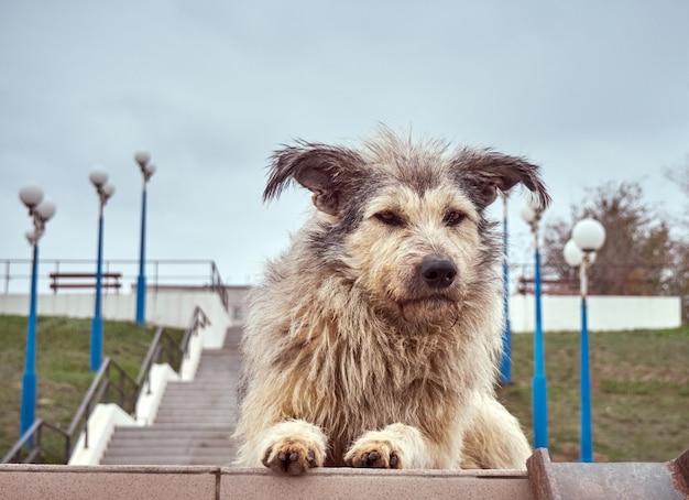 Cachorro peludo sem-teto sozinho com olhos penetrantes.