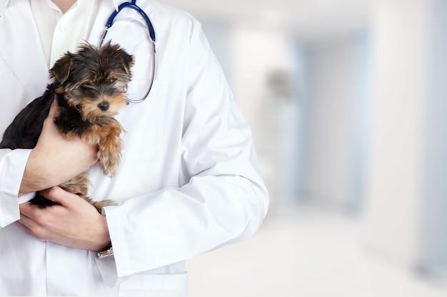 Cachorro pequeno e fofo examinado no veterinário