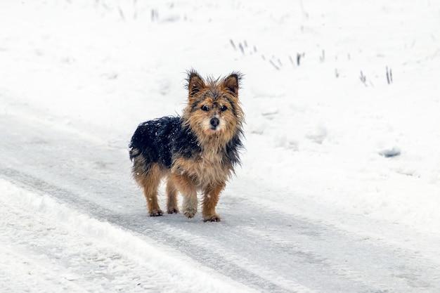Cachorro pequeno peludo no inverno na estrada