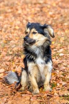 Cachorro pequeno sentado nas folhas secas de outono no parque