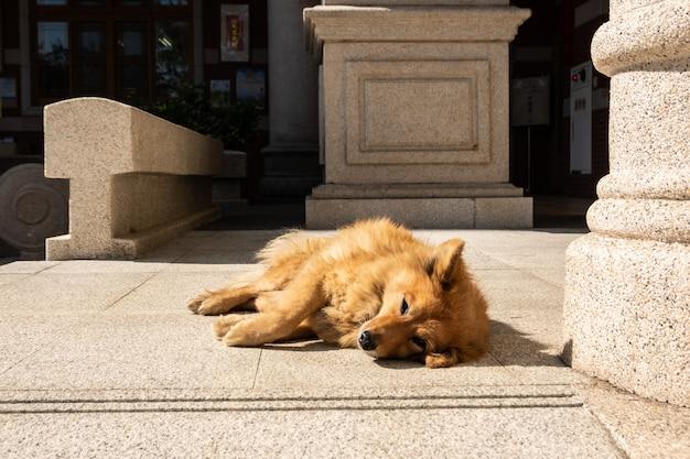 Cachorro perdido deitado no chão da cidade