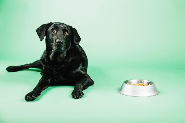 Cachorro perto de tigela com comida