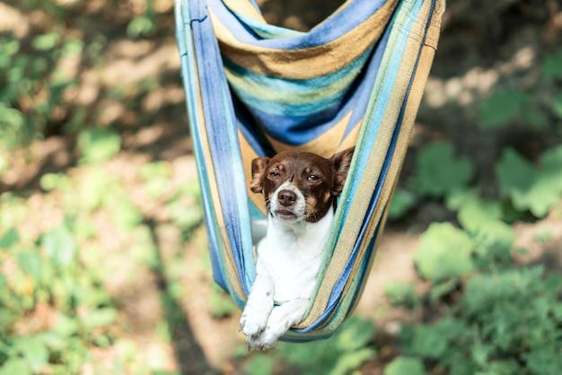 Cachorro preguiçoso fofo e engraçado deitado em uma rede na floresta