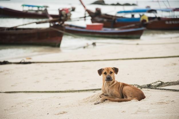 Cachorro preguiçoso relaxante na praia de areia