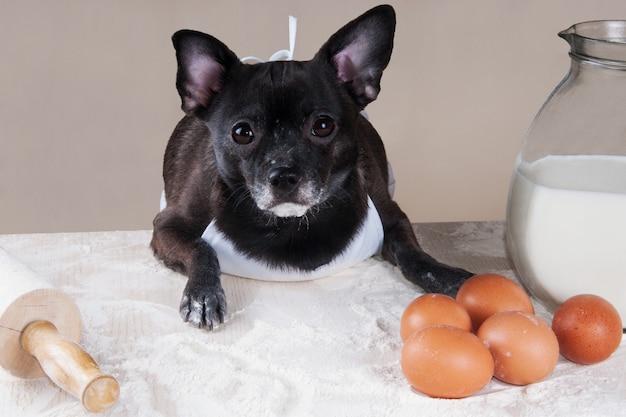 Cachorro preto chihuahua cozinhando na cozinha cozinhando nutrição e conceito de páscoa
