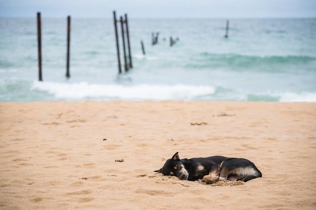 Cachorro preto dormindo na praia perto de uma ponte de madeira decadente