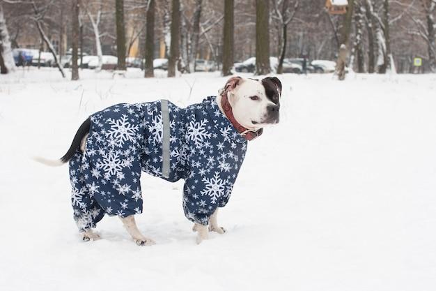 Cachorro preto e branco passeando na neve do inverno
