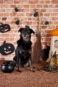 Cachorro preto fantasiado de bruxa