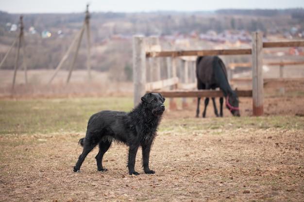 Cachorro preto guardando o paddock com cavalos