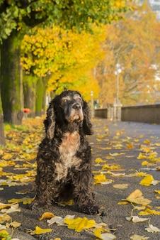 Cachorro preto no colorido parque do outono