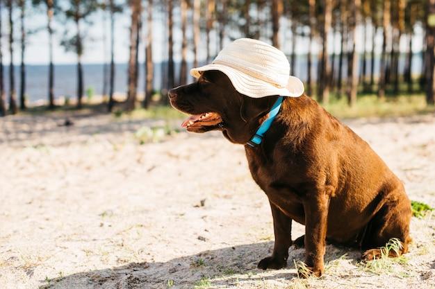 Cachorro preto se divertindo na praia