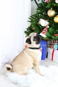 Cachorro pug engraçado, fofo e brincalhão no tapete branco perto da árvore de natal