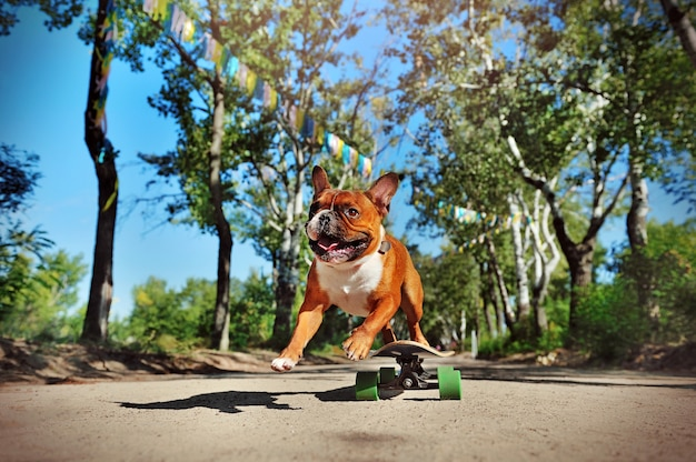 Cachorro pulando da prancha longa