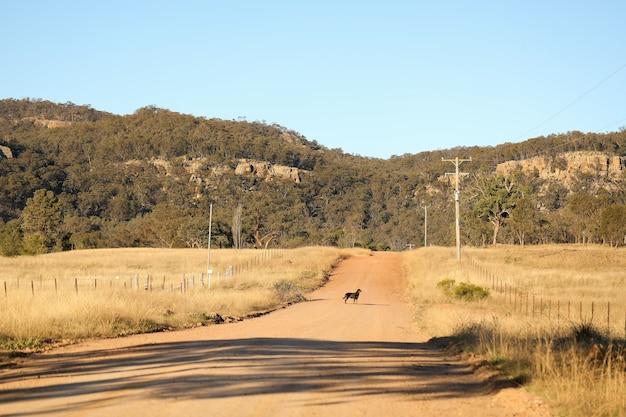 Cachorro rottweiler caminhando por uma estrada rural sob o sol dourado da tarde
