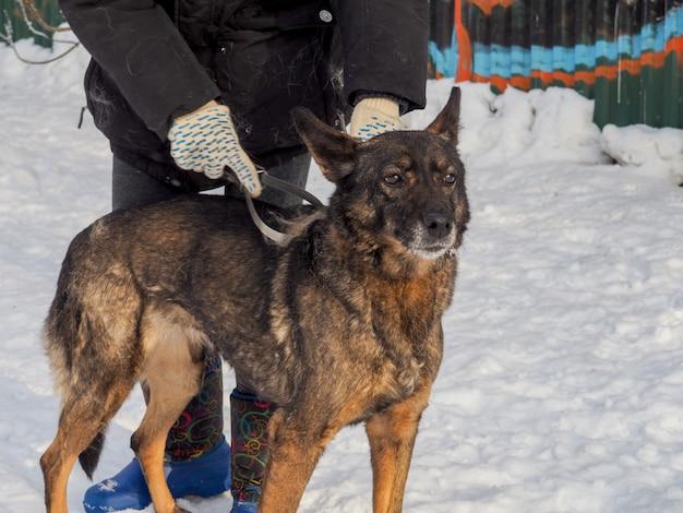 Cachorro ruivo sem teto, cachorro de rua, gentil e fiel