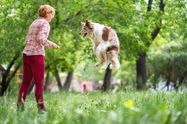Cachorro salsicha pega um disco em um salto Foto Premium