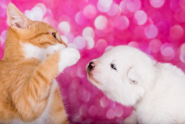 Cachorro samoiedo com gatinho vermelho zangado de olhos verdes