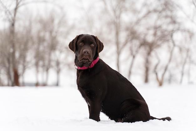 Cachorro se divertindo na neve com a família
