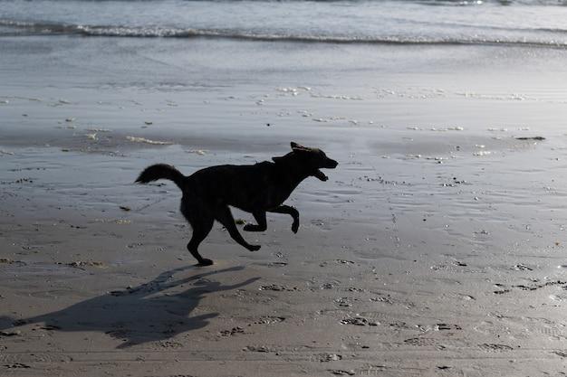 Cachorro se divertindo na praia. o animal de estimação relaxa ao ar livre no verão. raça cão correndo.