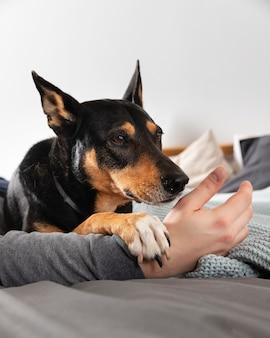 Cachorro segurando a mão do dono