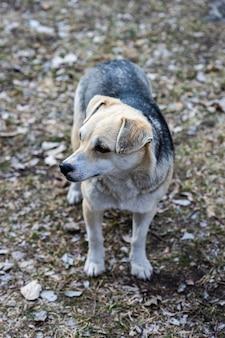 Cachorro sem teto andando