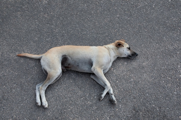 Cachorro sem teto dormindo no chão de asfalto