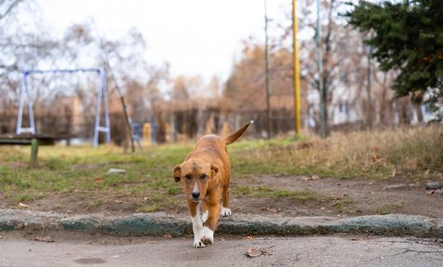 Cachorro sem teto sentado na rua.