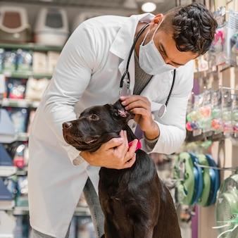 Cachorro sendo examinado pelo veterinário na loja de animais