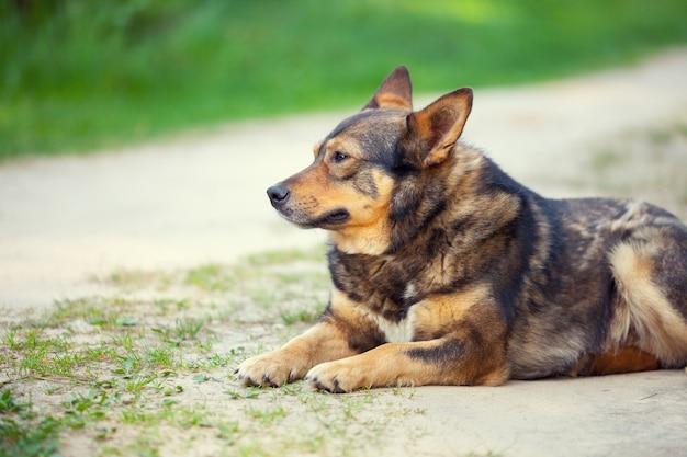 Cachorro sentado à beira da estrada no campo