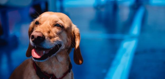 Cachorro sentado à sombra na balsa e ofegante