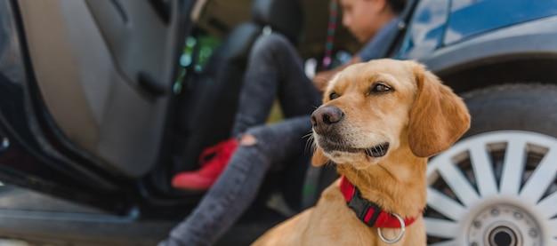 Cachorro sentado ao lado do carro