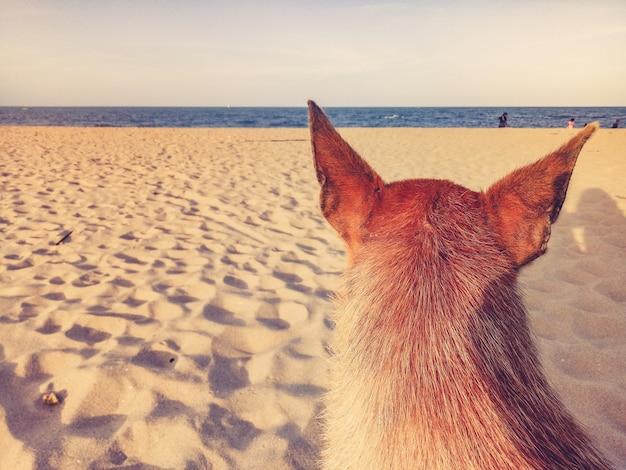 Cachorro sentado em praias de areia pobres com mar azul, céu claro, fundo de feliz feriado