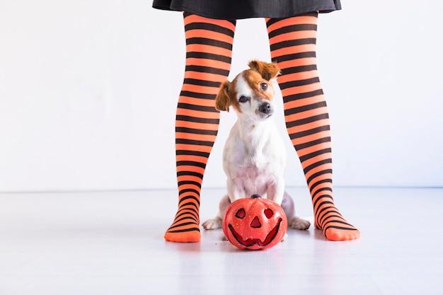 Cachorro sentado no chão com uma abóbora e seu dono. mulher vestindo malha preta e laranja. conceito de dia das bruxas. estilo de vida dentro de casa