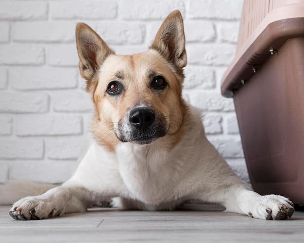 Cachorro sentado perto de seu canil