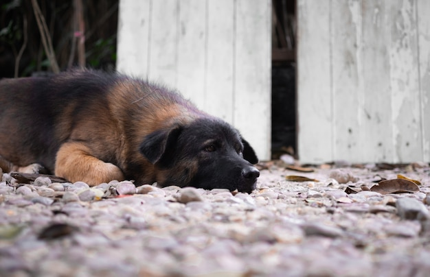 Cachorro solitário dormindo no chão.