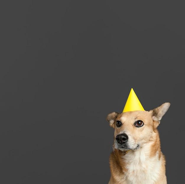 Cachorro sorridente com chapéu de papel