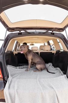 Cachorro sorridente em paz no porta-malas de um carro