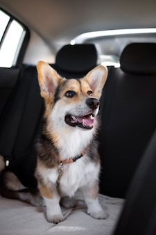 Cachorro sorridente fofo dentro do carro