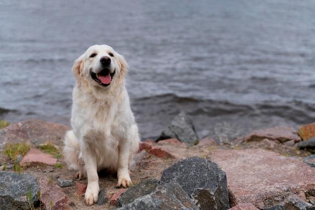 Cachorro sorridente sentado perto da água