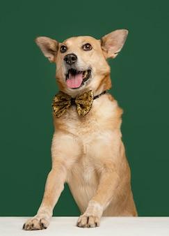 Cachorro sorridente usando gravata borboleta com fundo verde