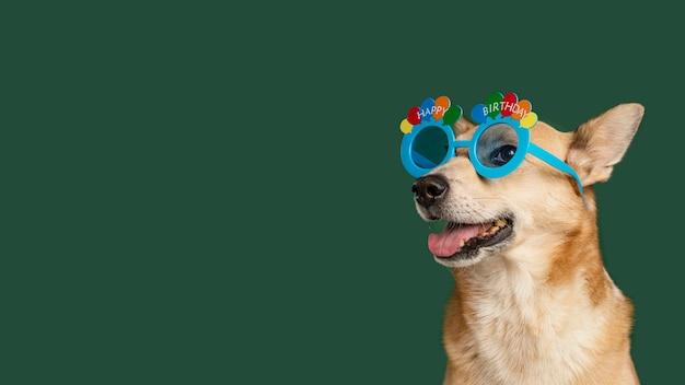 Cachorro sorridente usando óculos bonitos
