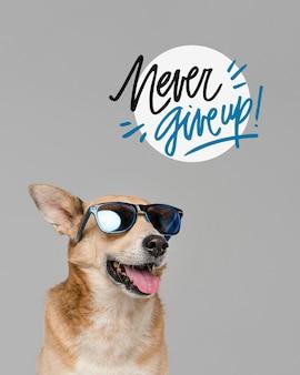 Cachorro sorridente usando óculos escuros