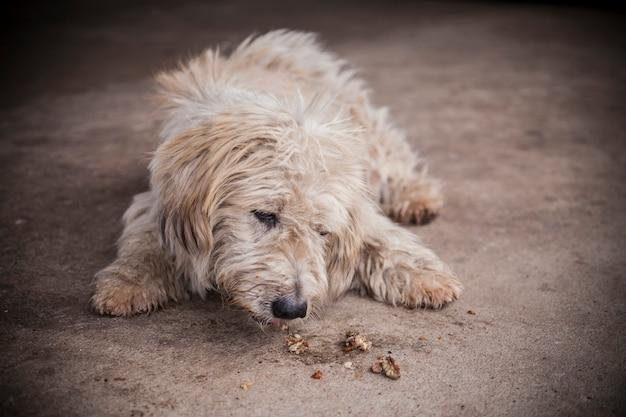 Cachorro sujo na rua Foto Premium
