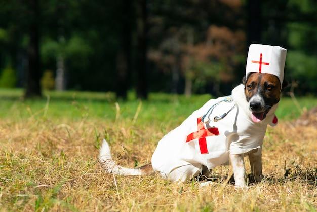 Cachorro terrier jack russell em um espaço de cópia de fantasia de médico