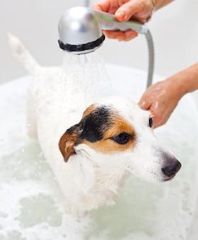 Cachorro tomando banho em uma banheira