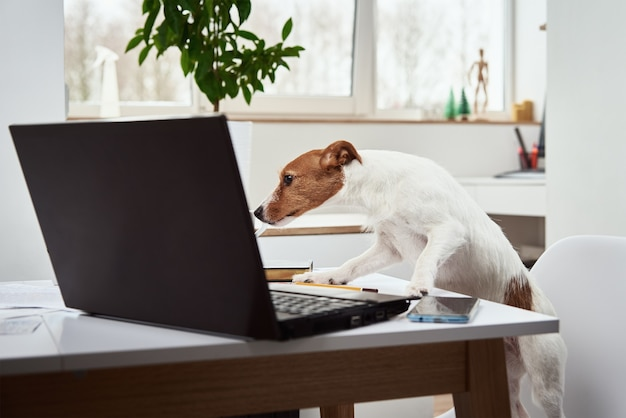 Cachorro trabalhando no laptop no escritório em casa. conceito de trabalho remoto