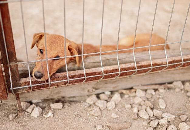 Cachorro triste deitado na gaiola em um abrigo