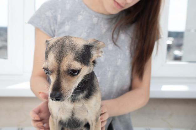 Cachorro triste na recepção do veterinário na clínica
