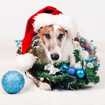 Cachorro usando chapéu com decoração de natal