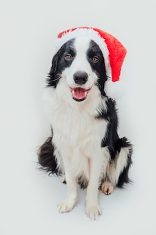 Cachorro usando fantasia de natal com chapéu de papai noel vermelho isolado no fundo branco